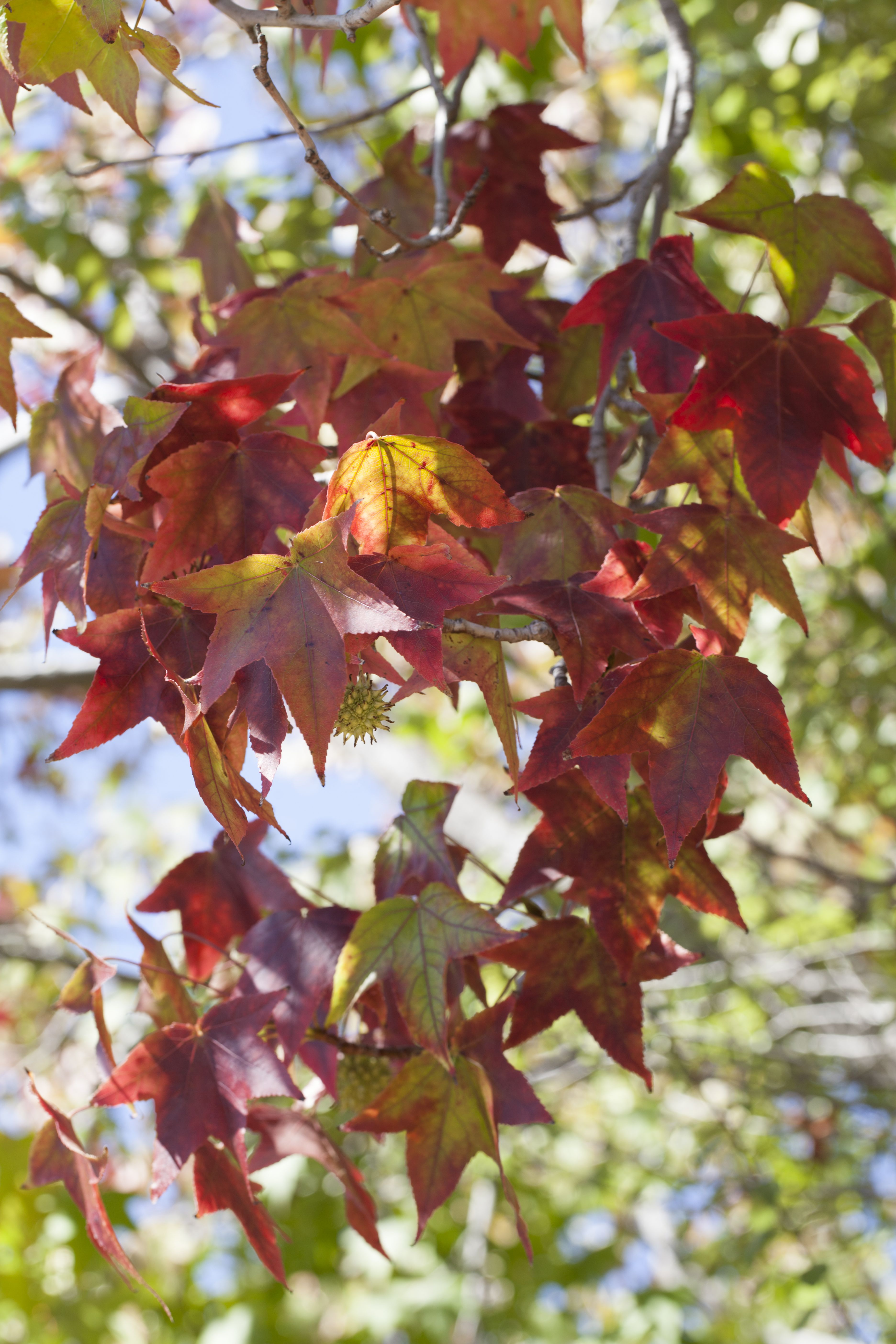 Autumn…a time of inspiration and change
